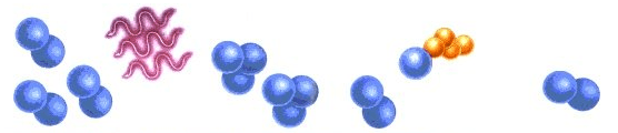 ozone process